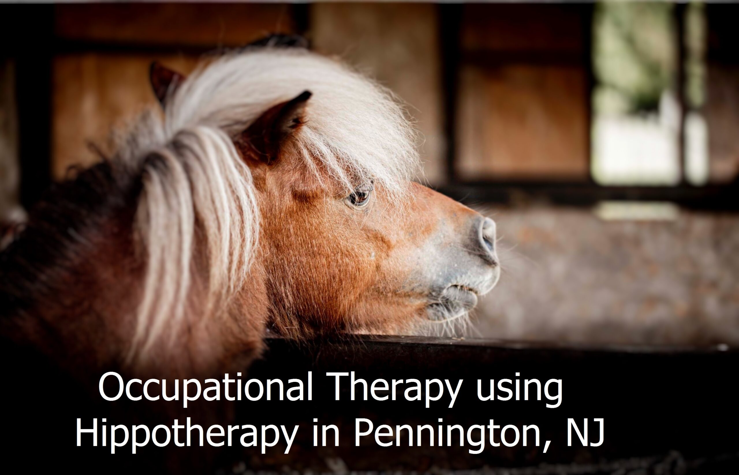 Occupational Therapy using HIppotherapy in Pennington NJ.